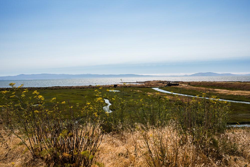 Marsh Hayward Regional Shoreline