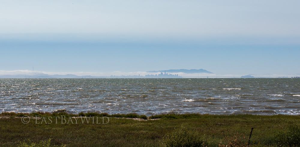 Bay Bridge and San Francisco from Hayward shoreline