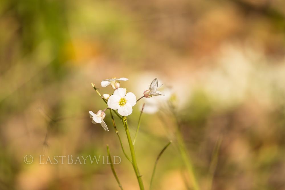 Indian Joe Trail Wildflower