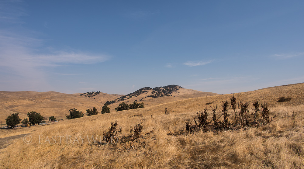 Brushy Peak September