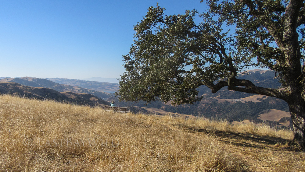 Eagle View Trail at Vista Grande Road