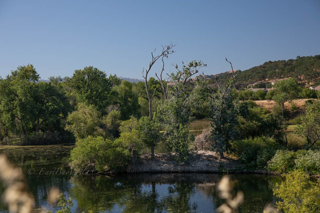 Island Pond, on the Arroyo Del Valle