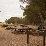 Picnic areas at the Great Highway staging area
