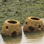 Reef Balls to aid oyster populations