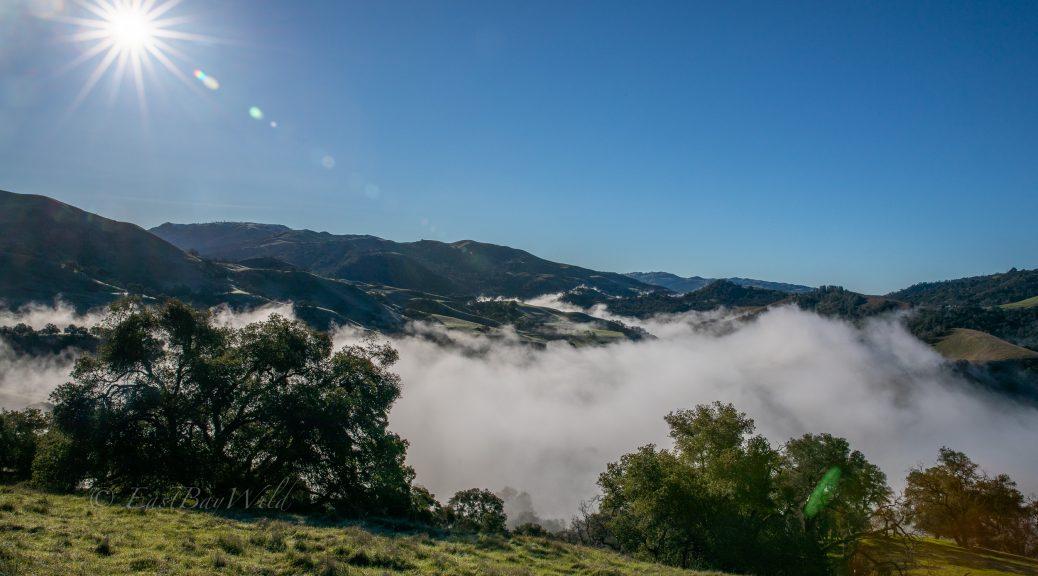 Fog in the Sunol Regional Wilderness Valley