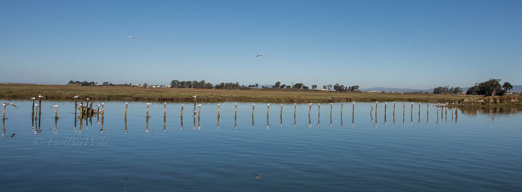 Moss Landing and Elkhorn Slough